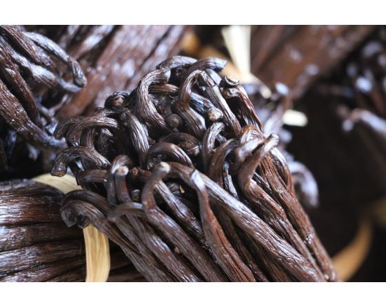 gousses de vanille bio origine madagascar en fagot